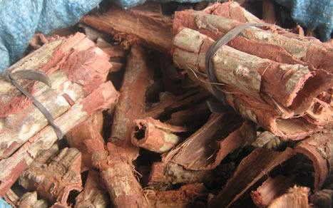 Chá das cascas de angico