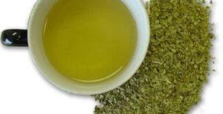 Chá mate – benefícios desta erva emagrecedora