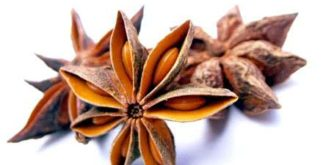 Chá de anis-estrelado – Conheça suas indicações
