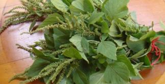 Chá de caruru – Benefícios e propriedades