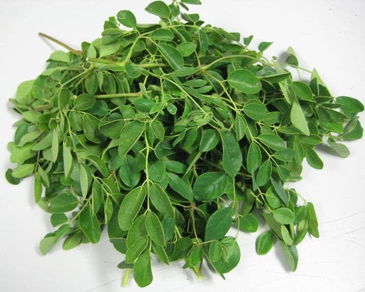 Chá de moringa - Benefícios e propriedades