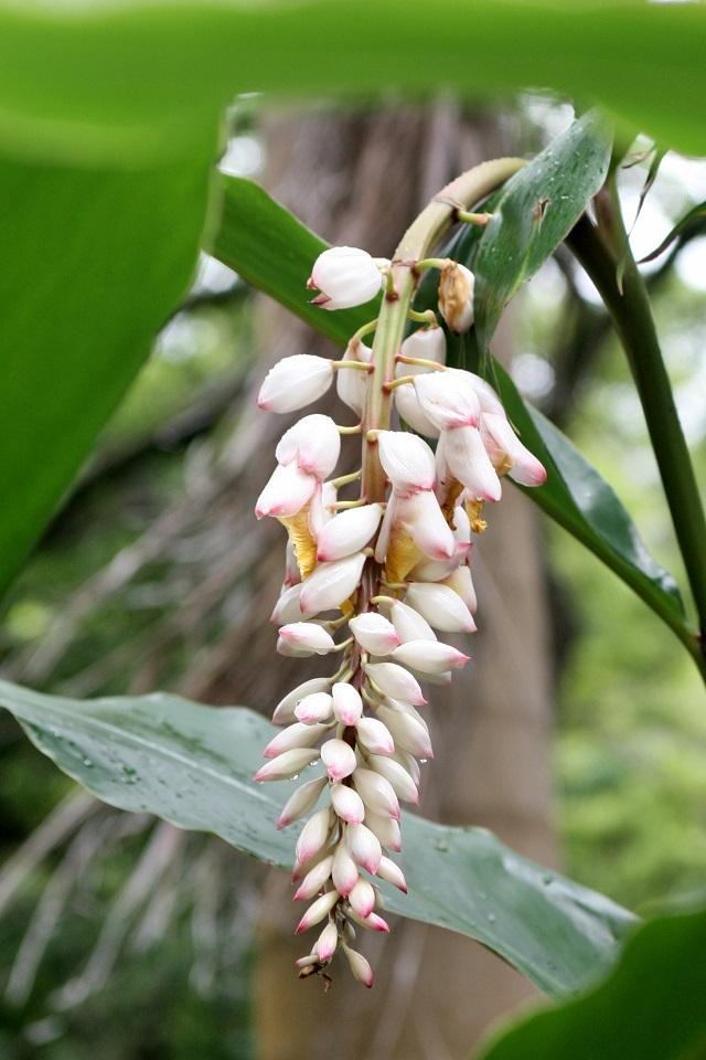Flores de colônia