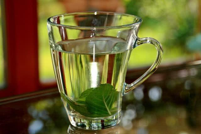 Razões para tomar o chá de hortelã depois de comer