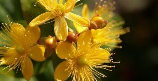 Descubra a 'super' planta capaz de levantar o ânimo
