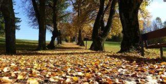 Chás ideais para tomar durante o outono