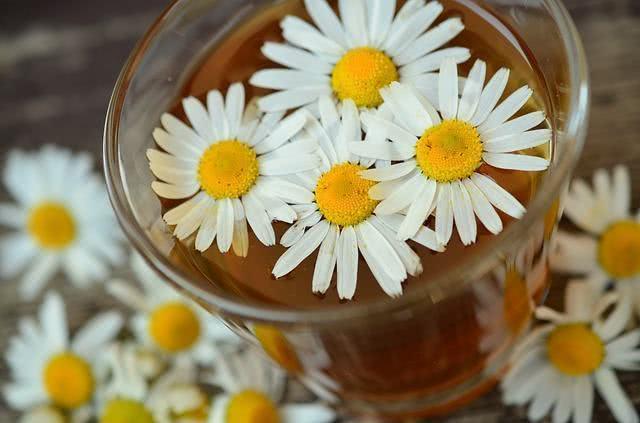 Pesquisa revela que chá de camomila reduz níveis de açúcar no sangue