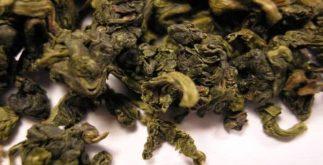 Oolong: quais os perigosos desse chá japonês