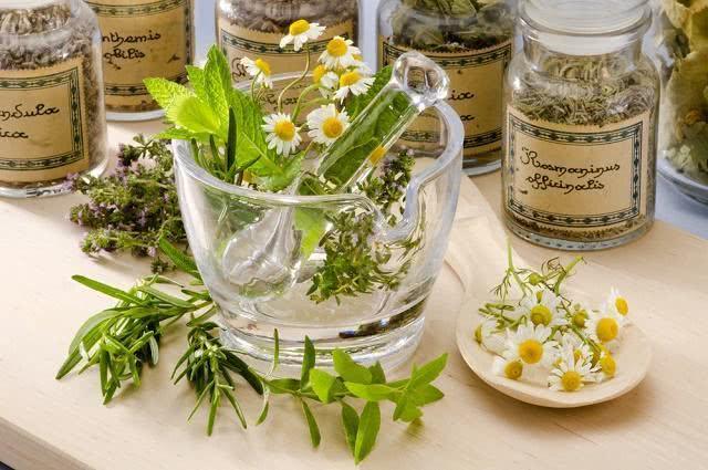 Veja como aproveitar melhor as plantas medicinais