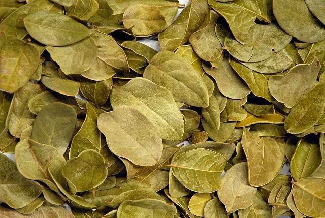 10-ervas-medicinais-que-curam-enfermidades-atraves-de-chas boldo