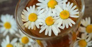 Chás feitos com plantas em formato de flor