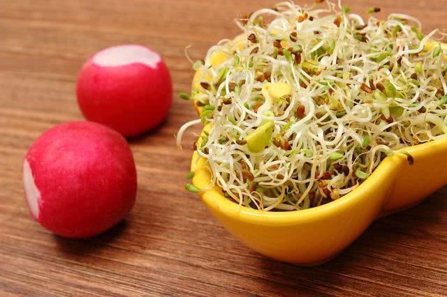 Chá de Alfafa ajuda a tratar doença cardíaca