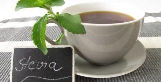 Estévia de Brasília: seu chá é indicado para aliviar a fadiga e tratar depressão