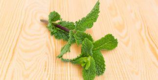 Para que serve o chá de hortelã peluda? Veja benefícios