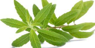 Chá de limonete age contra a diarreia. Aprenda a preparar