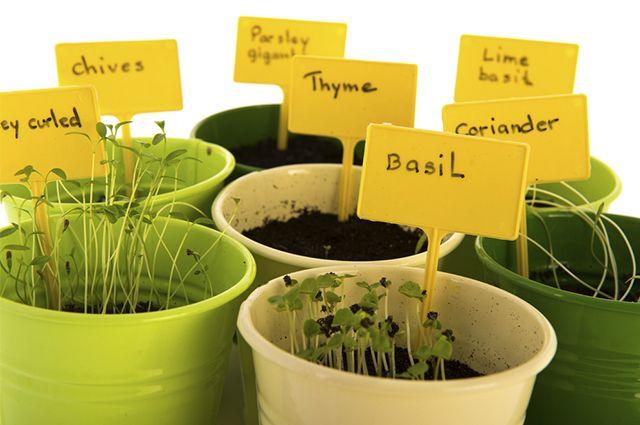De onde vem os nomes das plantas? Como surgiram? Descubra!