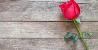 Chá de rosa vermelha tonifica o sistema imunológico