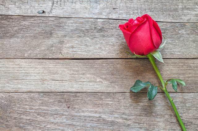 Propriedades e benefícios do chá de rosa vermelha