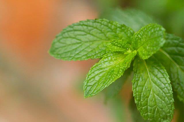 4 receitas de chás descongestionantes para o nariz - Chá de Hortelã