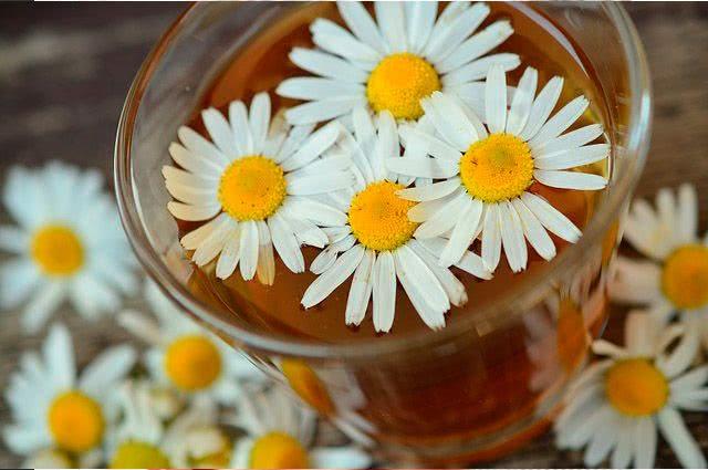 4 incríveis ervas para chás que curam doenças - Camomila