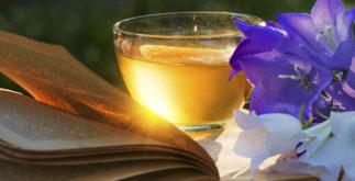 Descubra quais as melhores ervas refrescantes para fazer chás