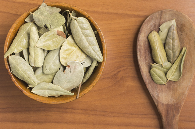 O chá de boldo reduz o desejo por doces e comidas gordurosas