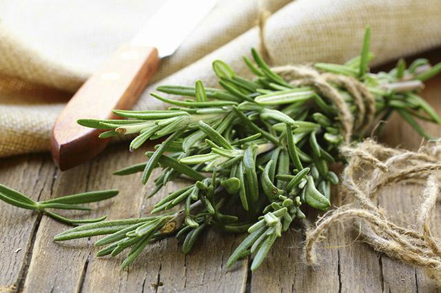 O chá de alecrim é um poderoso digestivo, que atua nos sintomas da má digestão