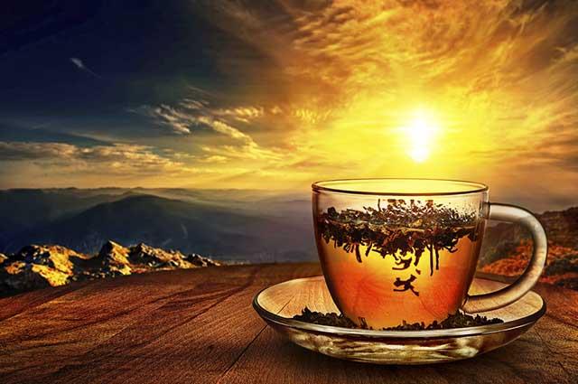 É importante saber fazer o chá de boldo para aproveitar seus inúmeros benefícios
