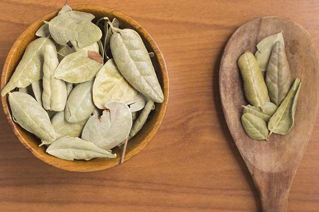O boldo é originário do Chile e é utilizado para facilitar a metabolização dos nutrientes