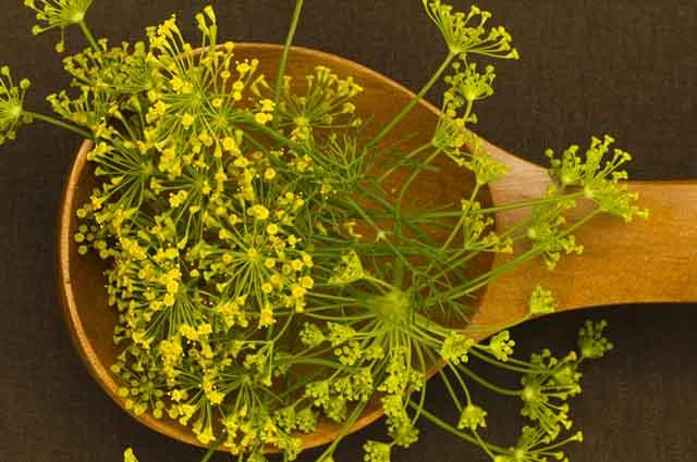 Além de emagrecer, o chá de erva doce pode ser usado para controlar a pressão arterial
