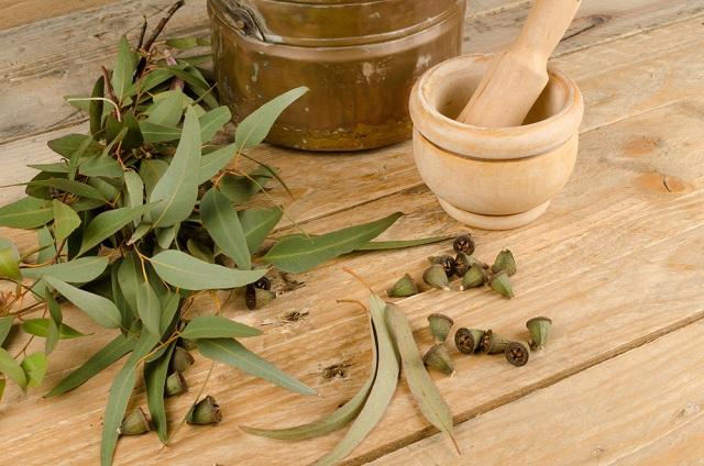 O chá de eucalipto aparece na lista dos chás contra sinusite
