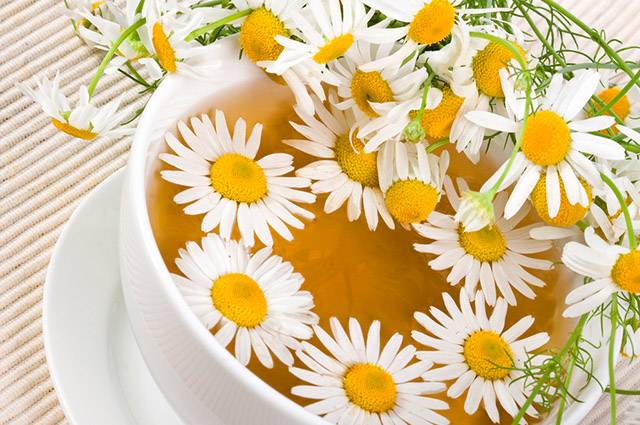 O chá de camomila encabeça a lista dos chás para ansiedade