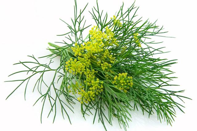 O chá de erva-doce aparece na lista dos melhores chás para gases por ser muito eficiente