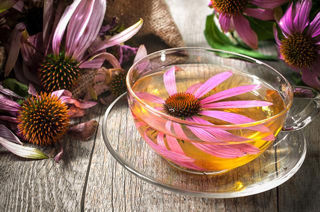 O chá de equinácea consegue tratar os sintomas da rinite