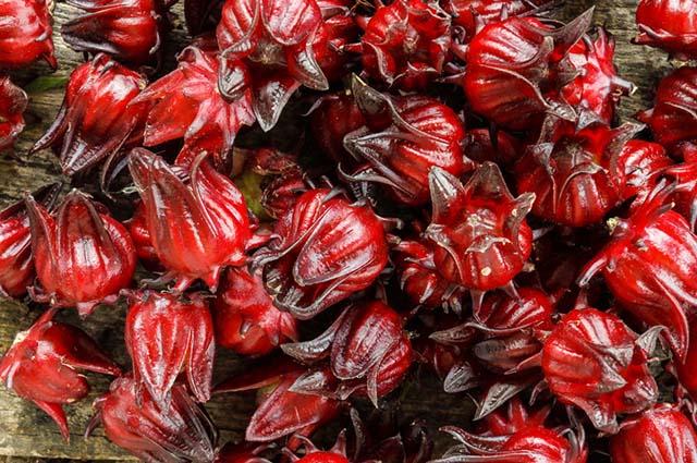 Planta hibiscus sabdariffa